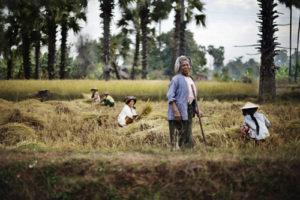 Kvinnor på risfält. Foto: Sara Kollberg